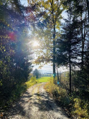 Herbstspaziergang_2020_1