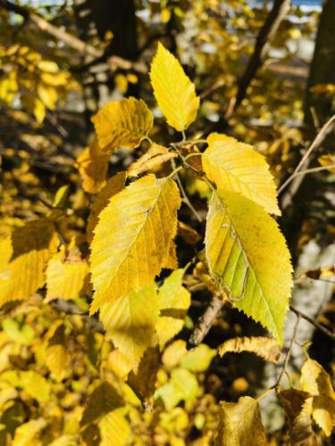 Herbstspaziergang_2020_13