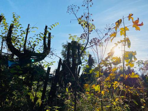 Herbstspaziergang_2020_15