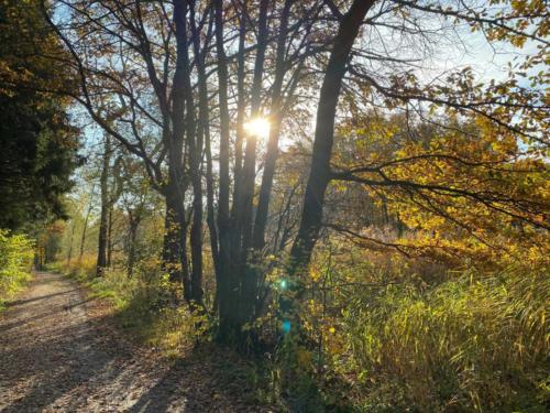Herbstspaziergang_2020_17