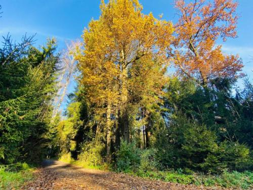 Herbstspaziergang_2020_18