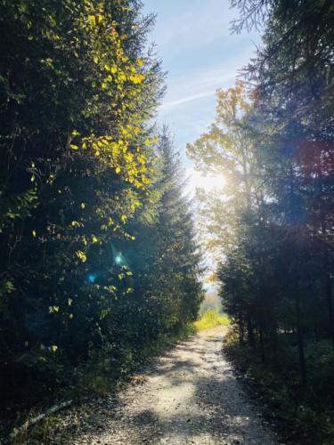 Herbstspaziergang_2020_3