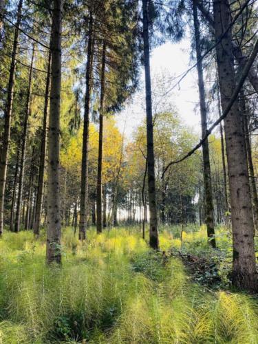 Herbstspaziergang_2020_6