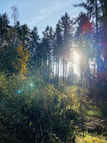 Herbstspaziergang_2020_7