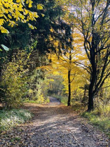 Herbstspaziergang_2020_8